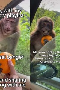 My trusty playlist