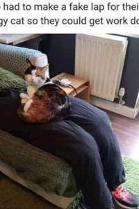A clingy cat