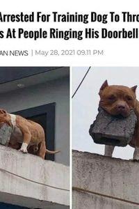 Tough guard dog