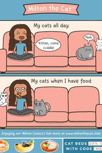 Yes that's cats